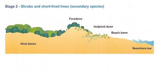 Coastal Sand Dunes Case Study Stockton